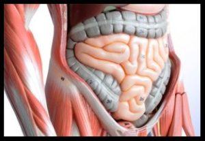 sindirim-sistemi-hastaliklari-sindirim-sorunlarindan-korunma-yollari-300x203
